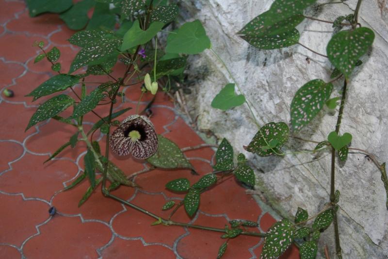 Des plantes d'intérieur spontanées Aristo13