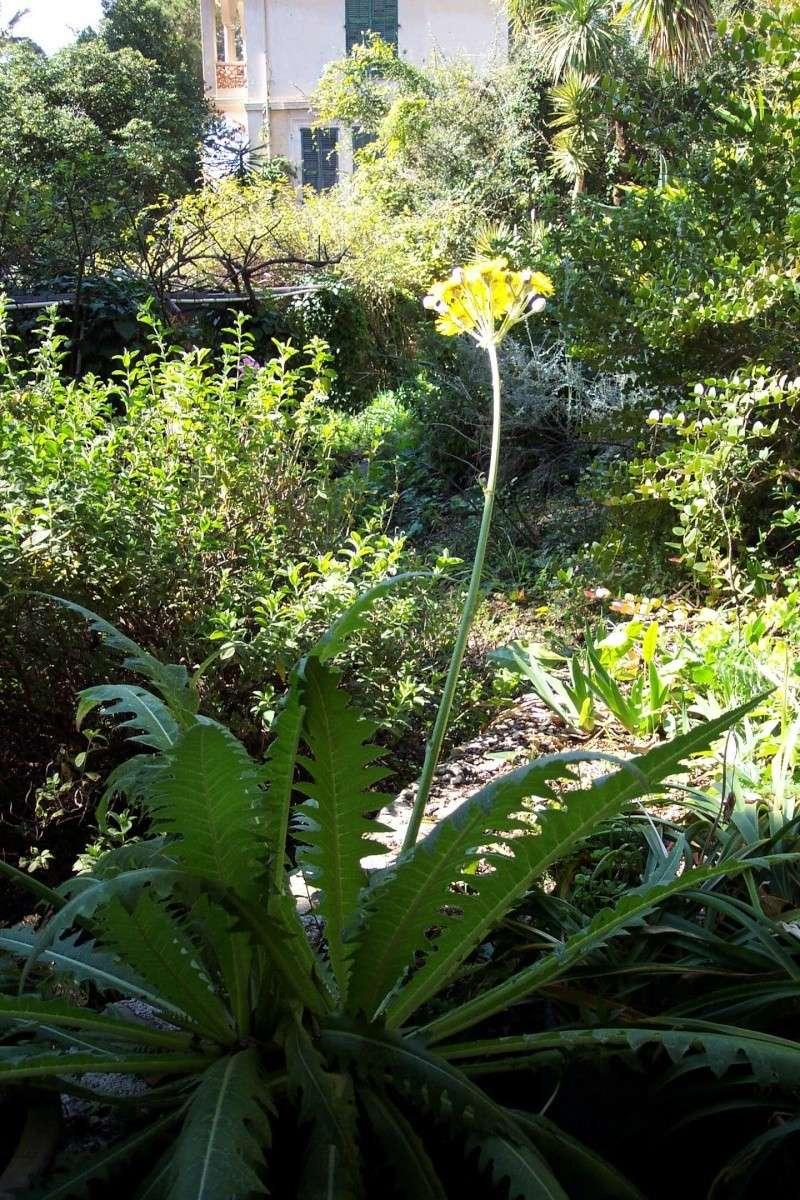 Fleur jaune,sauvage ,à identifier. Clos_d10