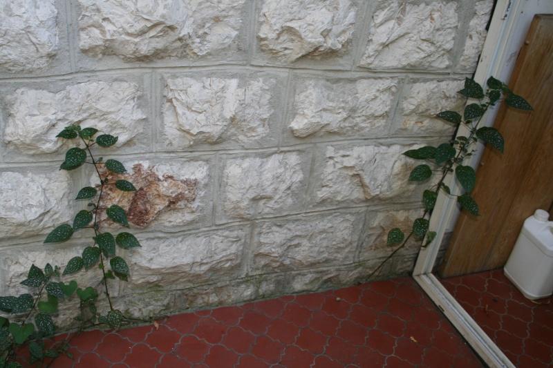 Des plantes d'intérieur spontanées Hypoes10