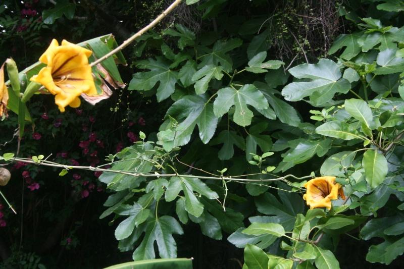 Quelques fleurs en ce mois de juin Soland10