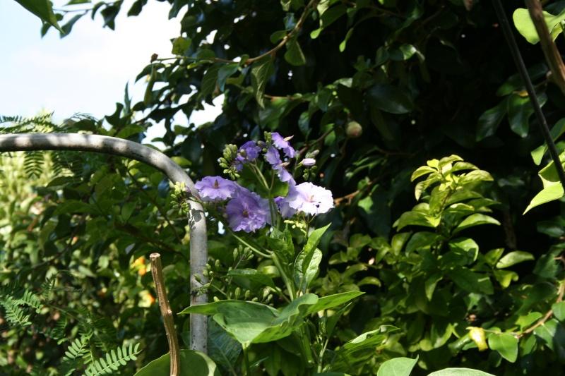 Fleurs de saison Solanu11