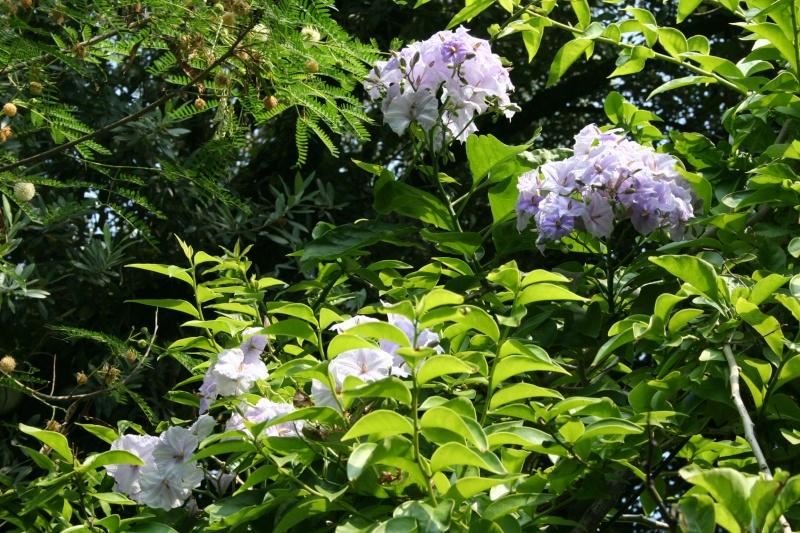 Fleurs de saison Solanu12