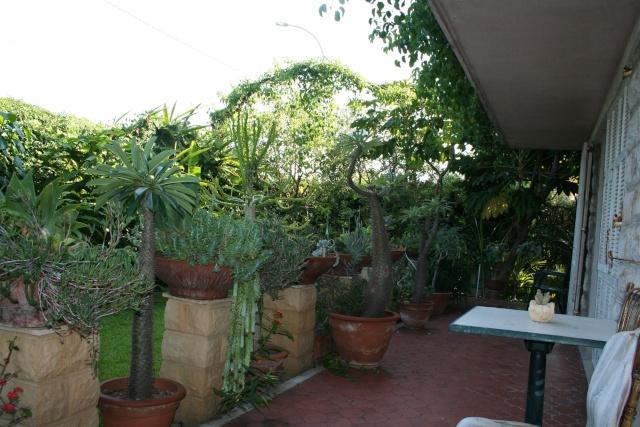 Tour de jardin en attendant une invitée Terras10