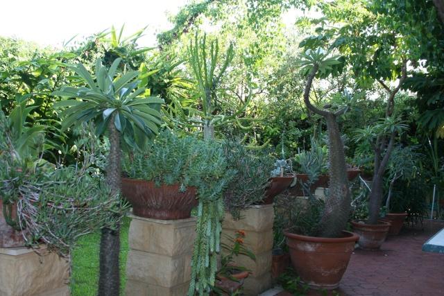 Tour de jardin en attendant une invitée Terras11