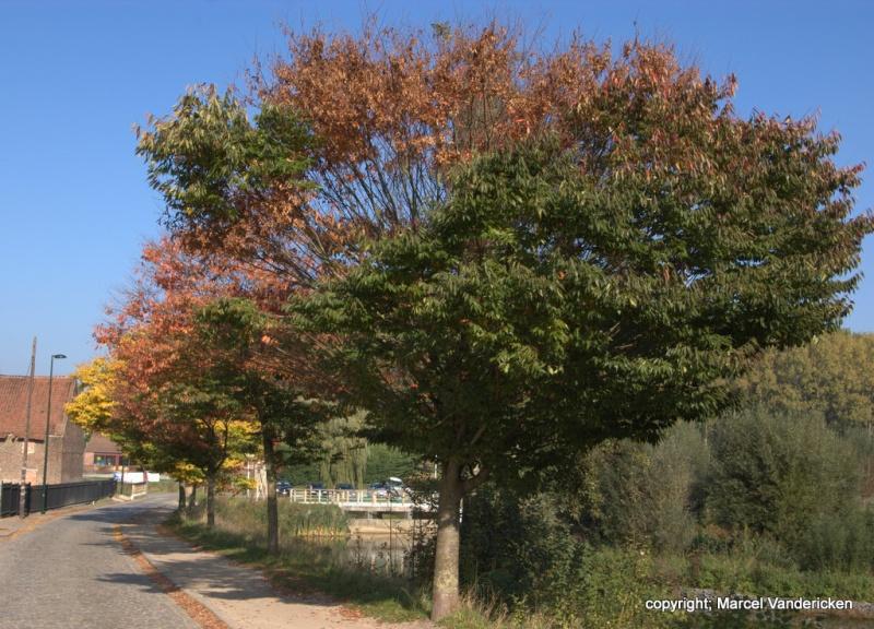 L'automne Sg1l1032