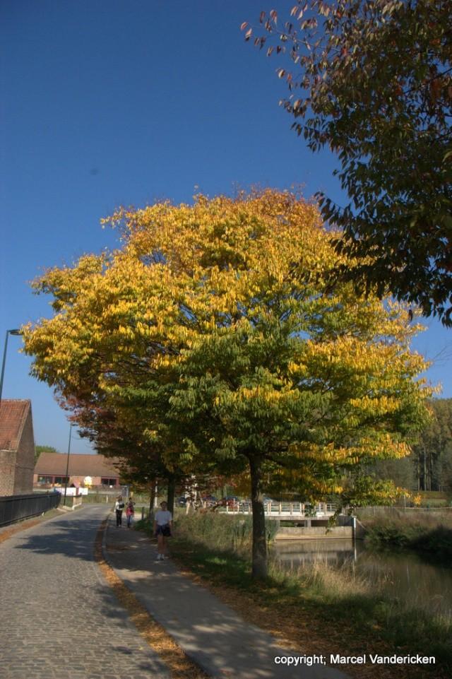 L'automne Sg1l1033