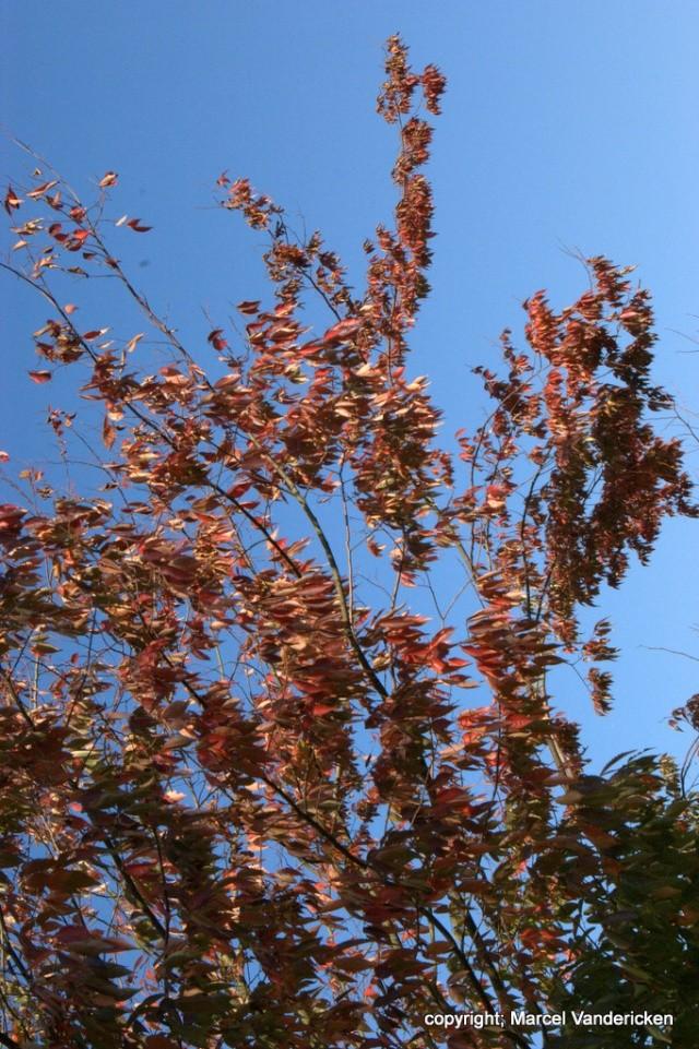 L'automne Sg1l1036