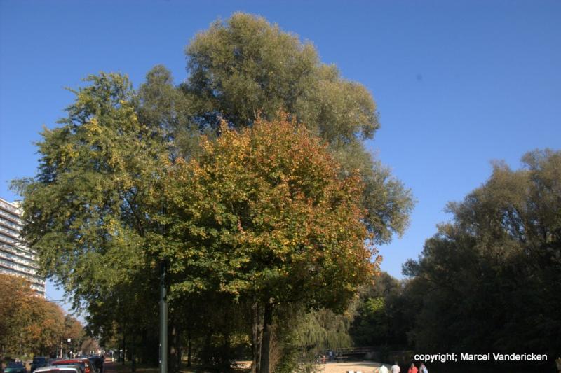 L'automne Sg1l1037