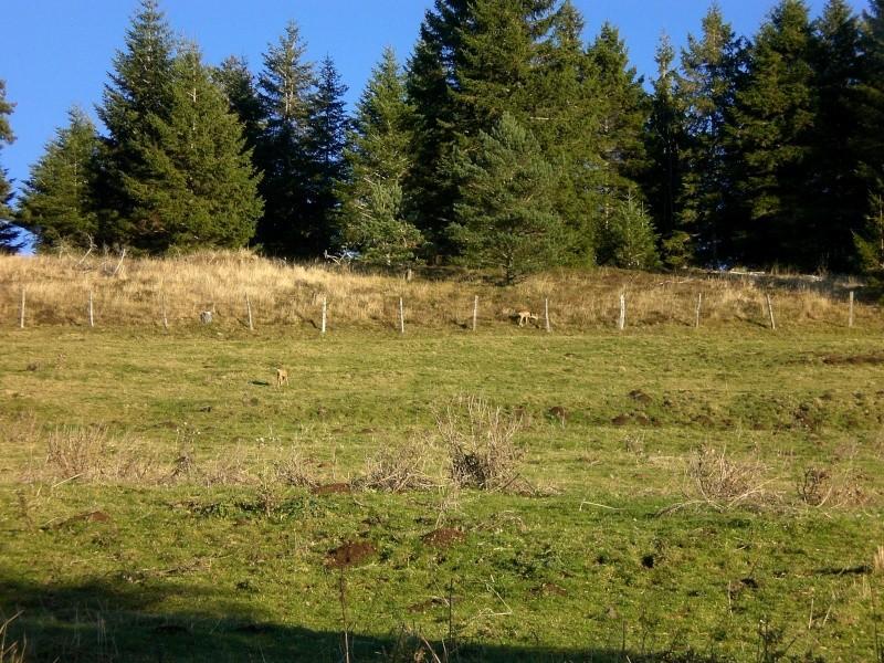 Le Cézallier en Octobre et Novembre 2010 Cimg8110
