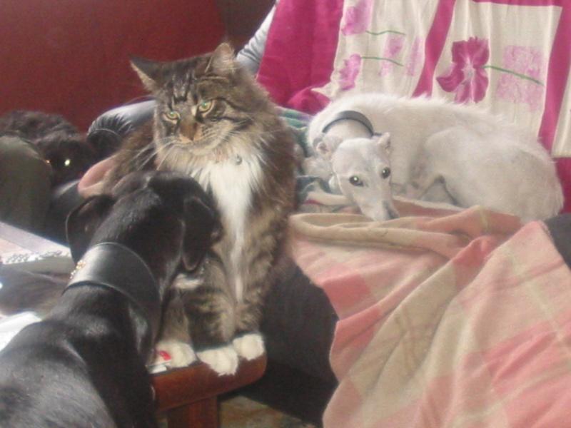 Avis sur un de mes chats ... 23_06_10