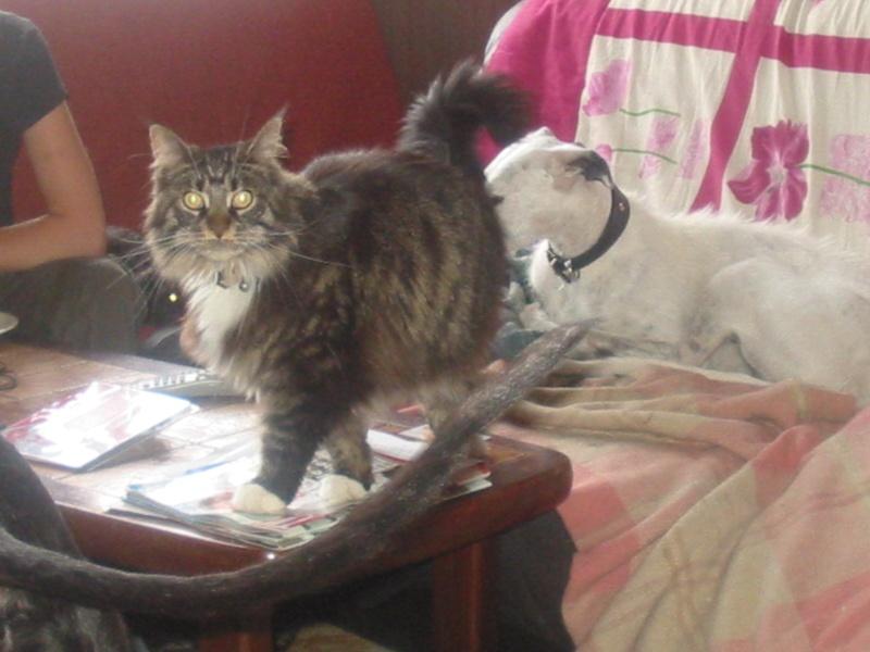 Avis sur un de mes chats ... 23_06_11