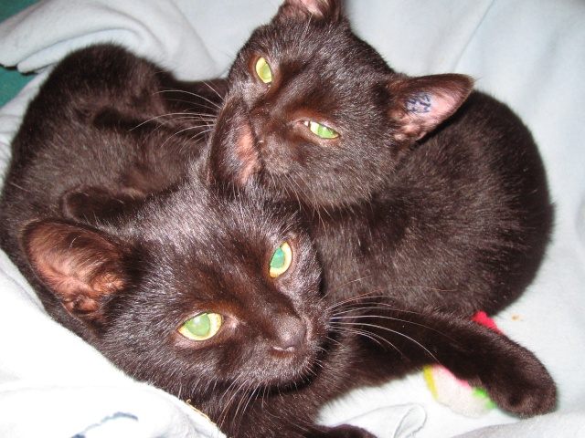 Papouille et cachou, noirs 6 mois Papoui10