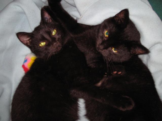 Papouille et cachou, noirs 6 mois Papoui11
