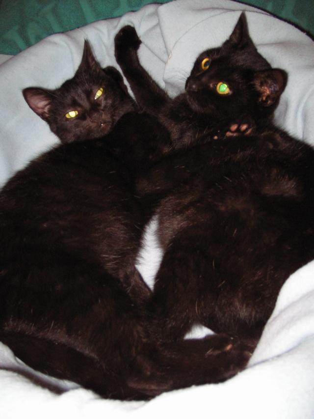 Papouille et cachou, noirs 6 mois Papoui12