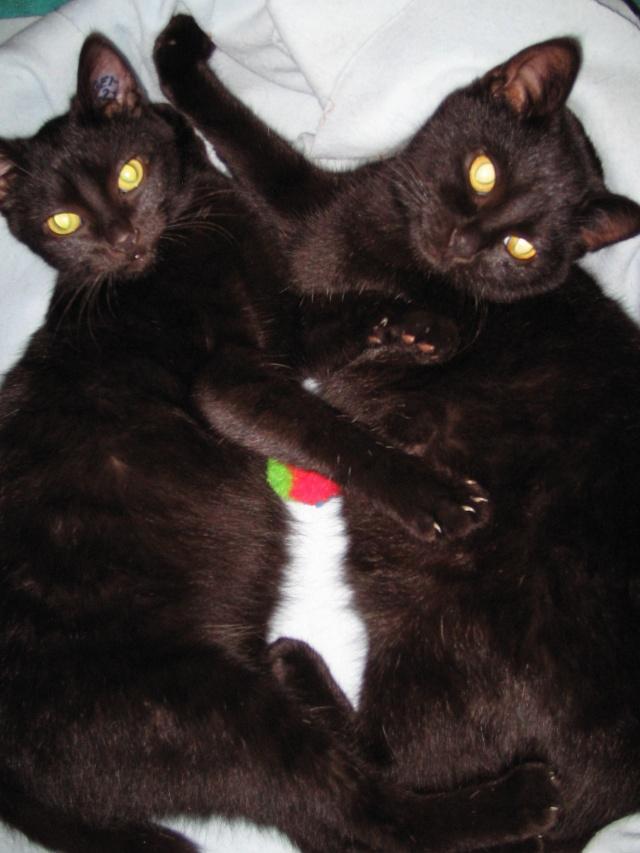 Papouille et cachou, noirs 6 mois Papoui13