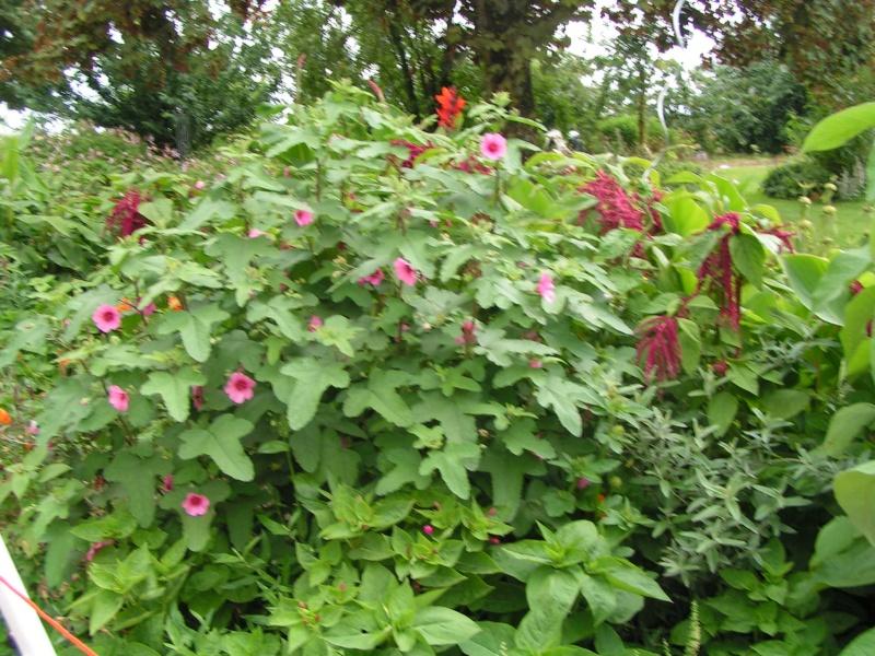 quelques photos de mon jardin - Page 2 Ete_2046