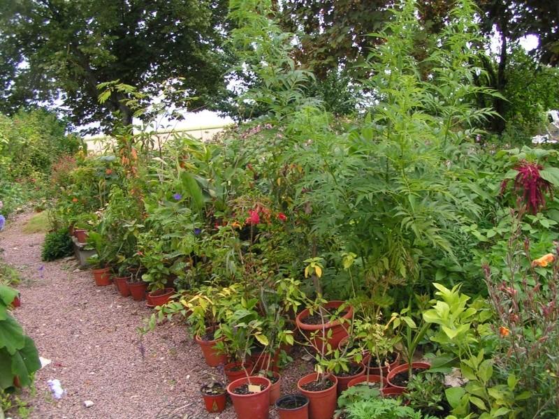 quelques photos de mon jardin - Page 2 Ete_2049