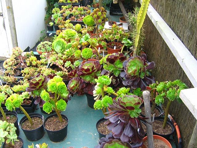 plantes à céder Septem10