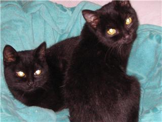 Papouille et cachou, noirs 6 mois M11