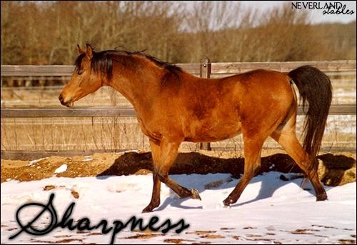 Chevaux de propriétaires [11 chevaux] Sharpn10