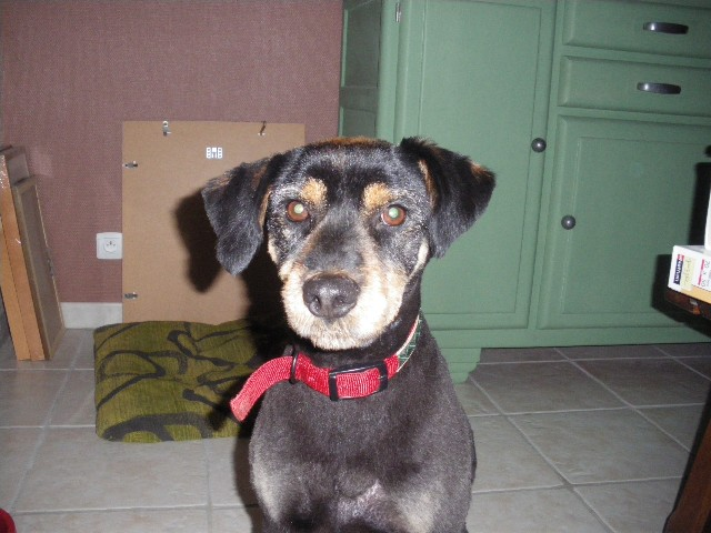 Youki, un adorable petit griffon à l'adoption  Imgp2010