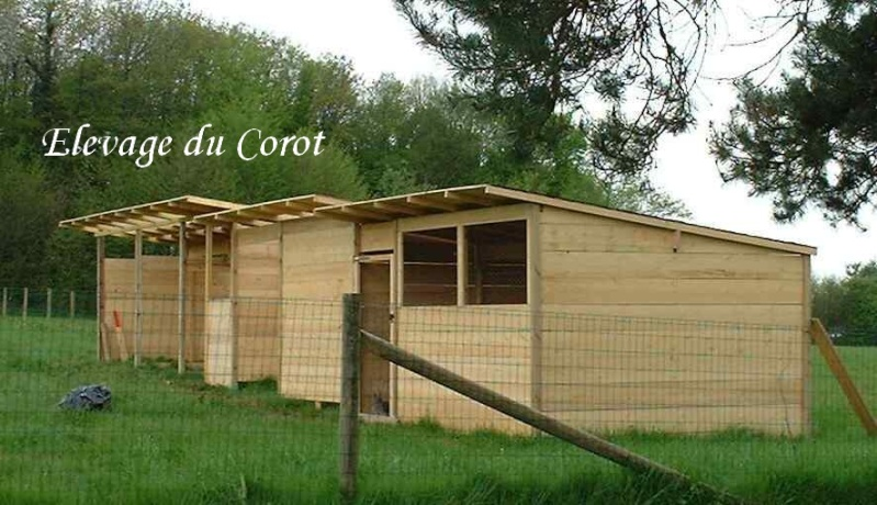 L'élevage du Corot Volier10
