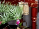 Cette fois c'est mon tenuifolia !! Fleur_10