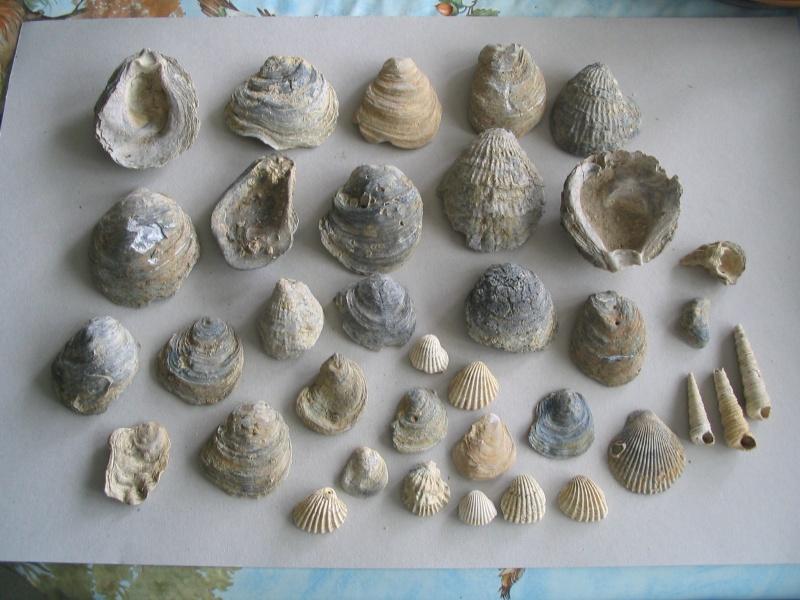 [résolu]Pliocène d'Italie 16_aou10