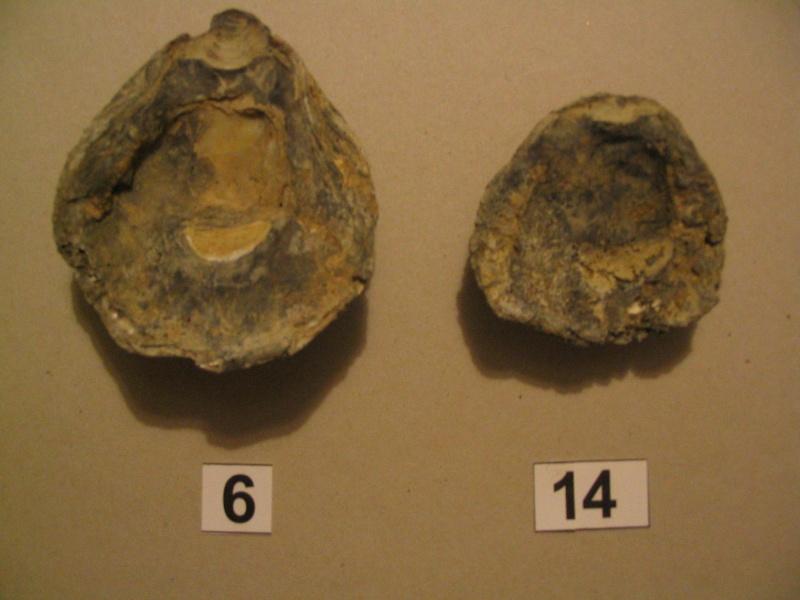 [résolu]Pliocène d'Italie 18_aou10