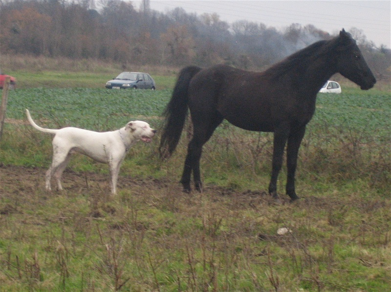 nos chevaux Img_1212