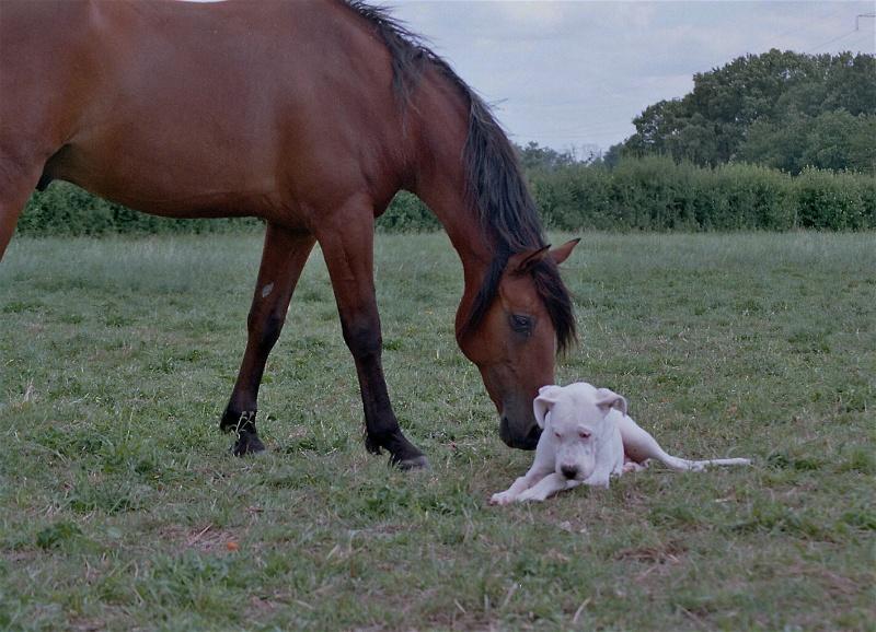 nos chevaux Imm01610