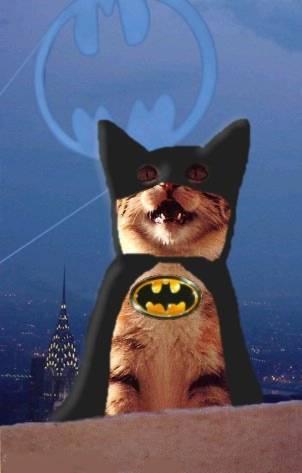 Postez ici des photos et Vidéos marrantes ! excellent ! - Page 20 Batman10