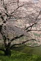 Demeure d'Ookami Cerisi10