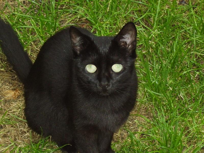 onyx noire 1an Photo_17
