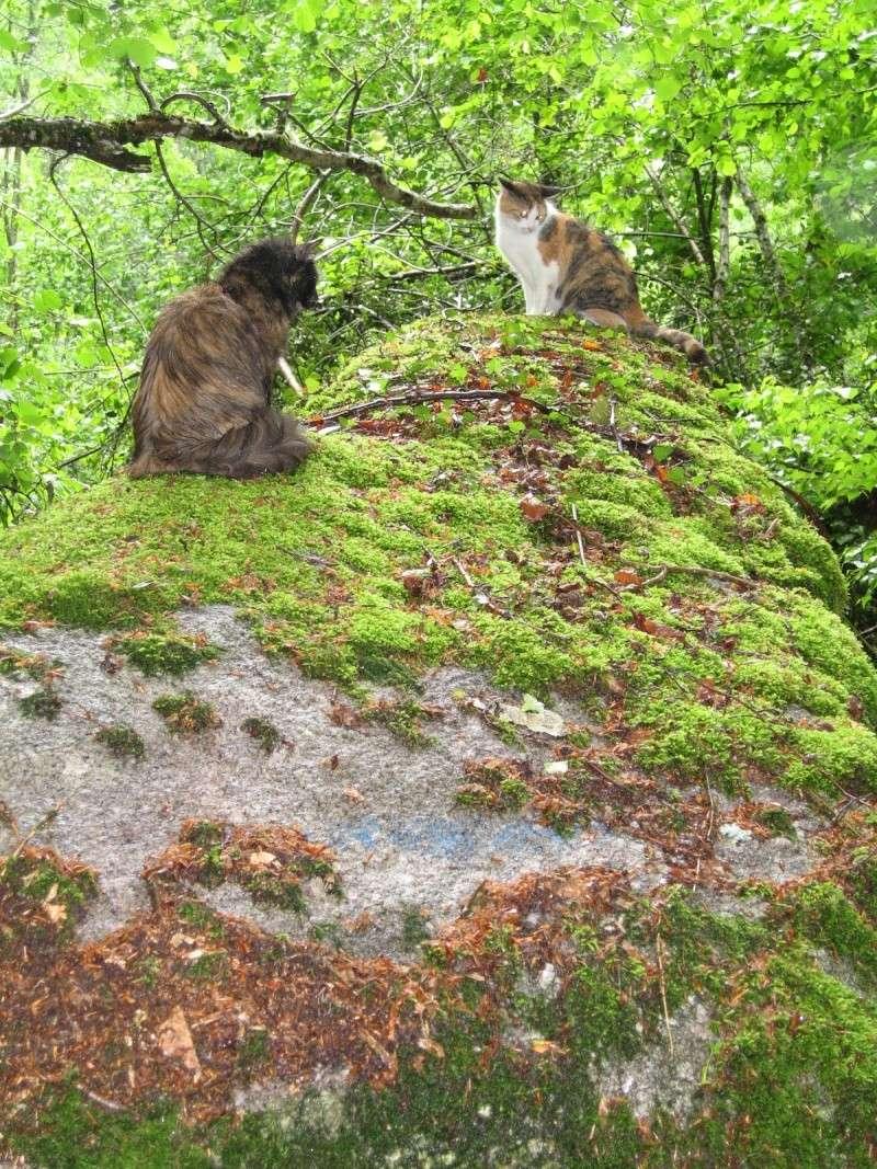 grosse chérie et petite chérie [chats] Img_0014