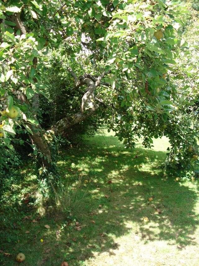le jardin de Giroflee - Page 4 188_0038