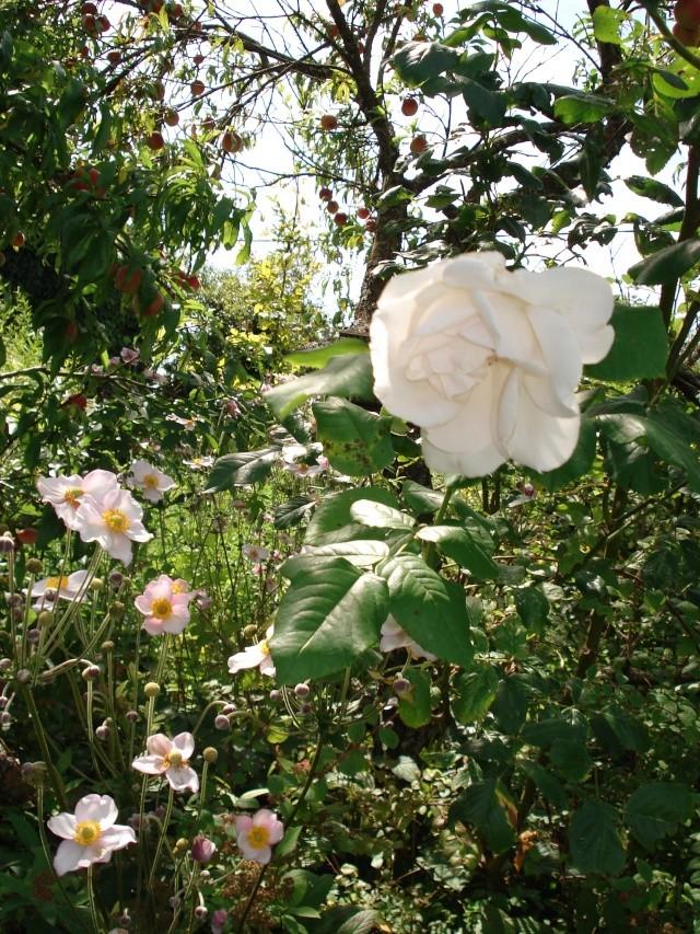 jardins et massifs de vivaces 188_0138
