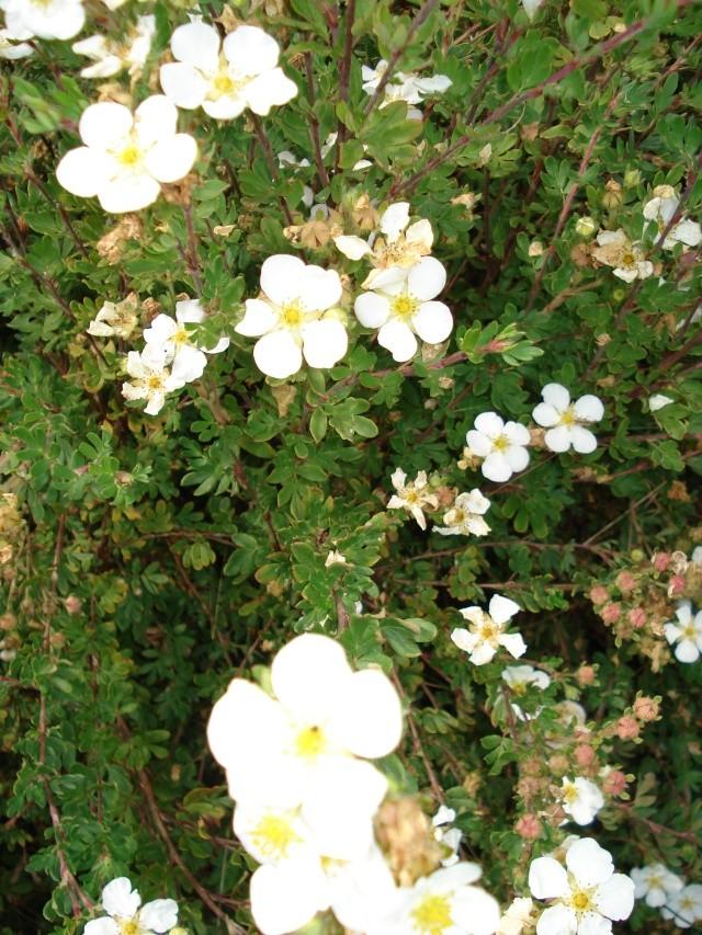 jardins et massifs de vivaces 188_0211