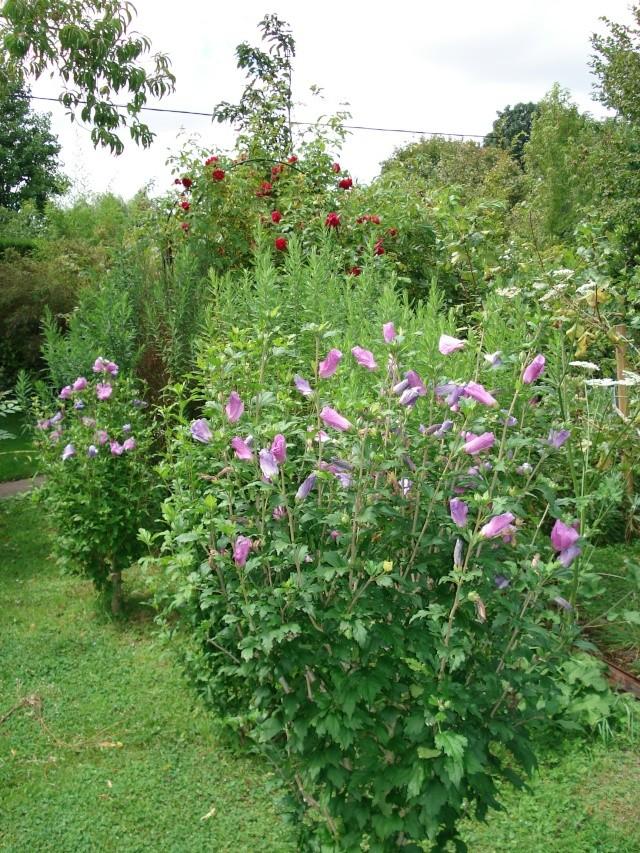 le jardin de Giroflee - Page 4 Jar_3_35