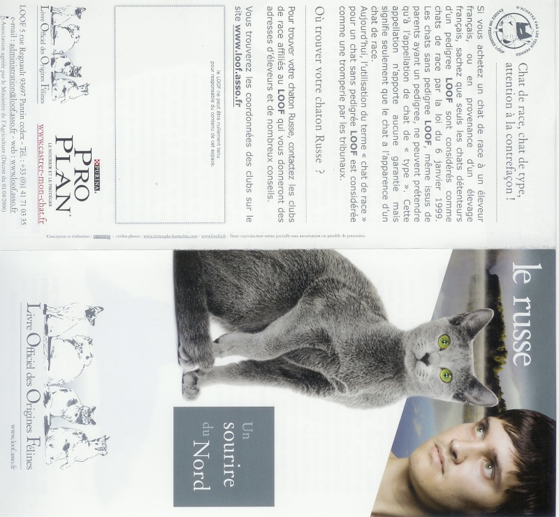 Nebelung and Russian blue in LOOF publication france Face_a11
