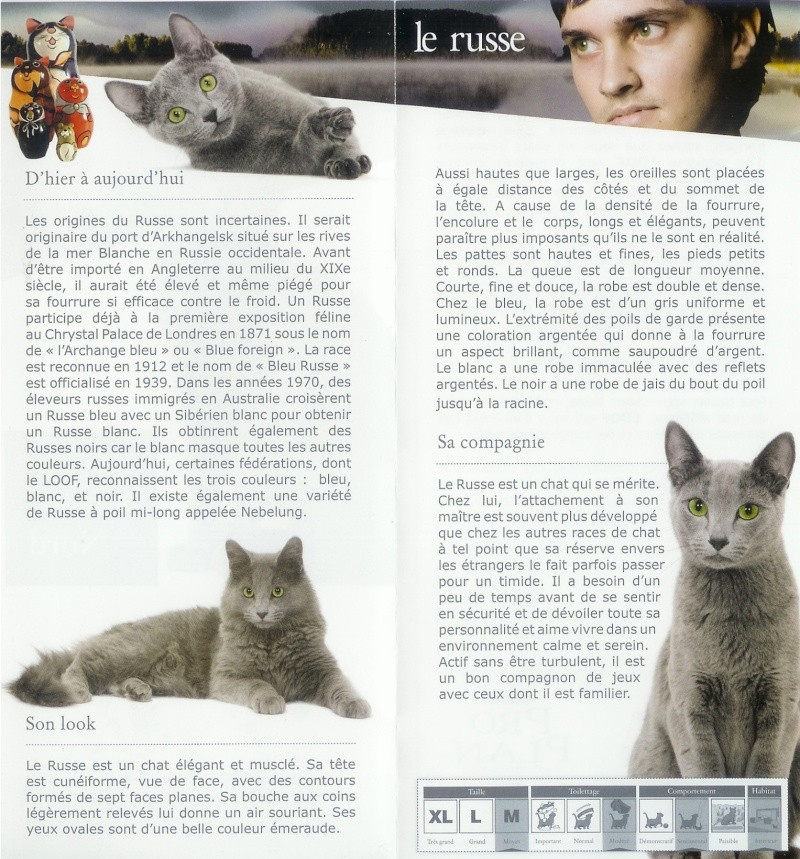 Nebelung and Russian blue in LOOF publication france Face_b12