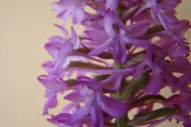 les plantes qui poussent dans ma région Dsc06414