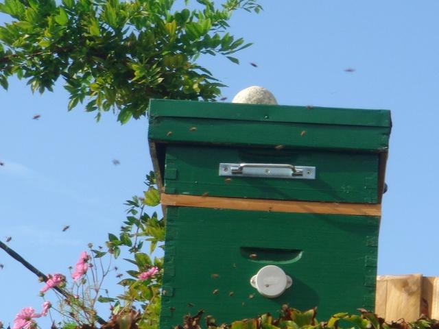 HELP!!!!une ruche sur un toit...........la saga! - Page 2 Divers11