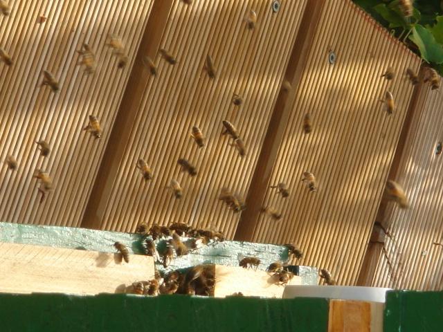 HELP!!!!une ruche sur un toit...........la saga! - Page 2 Divers12