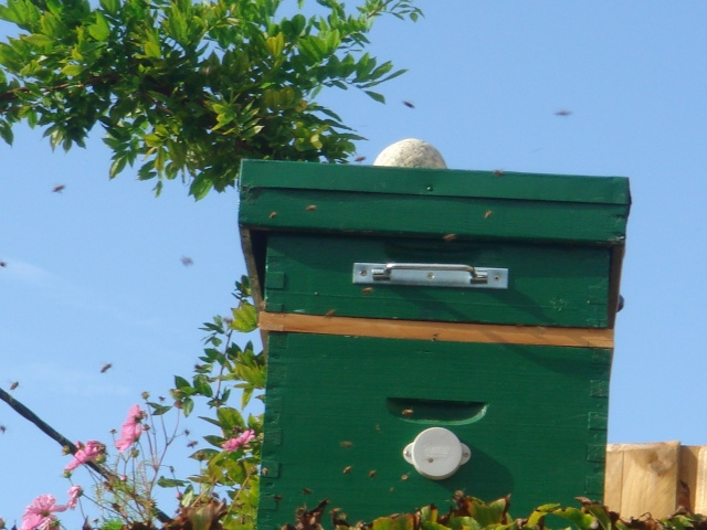 bilan des aimants pour ruches Divers13