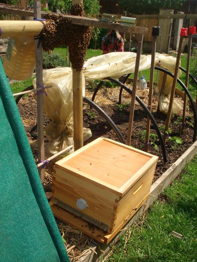 HELP!!!!une ruche sur un toit...........la saga! - Page 4 Essemm10