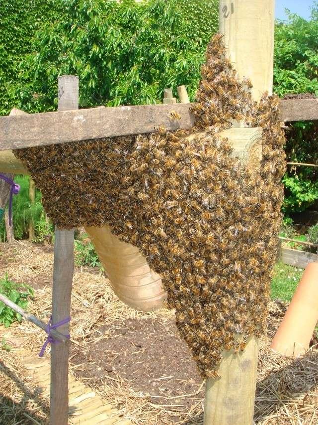 HELP!!!!une ruche sur un toit...........la saga! - Page 4 Essemm11