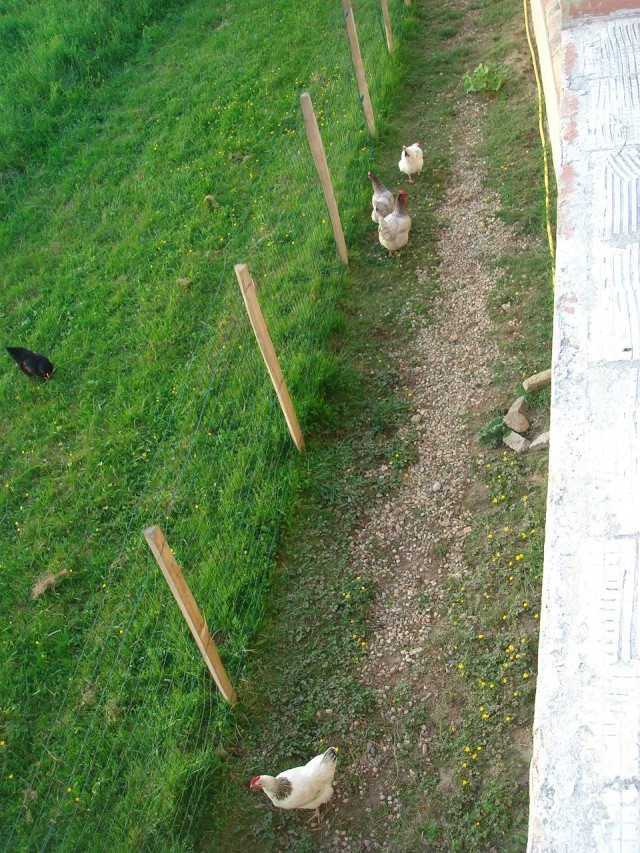 HELP!!!!une ruche sur un toit...........la saga! - Page 4 Jardin10