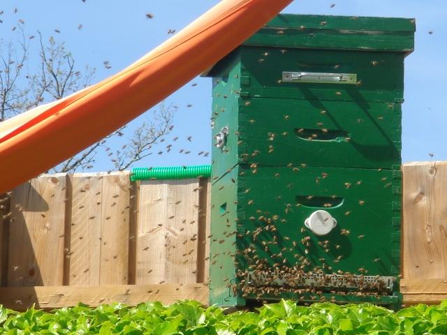 HELP!!!!une ruche sur un toit...........la saga! - Page 4 Mes_za10