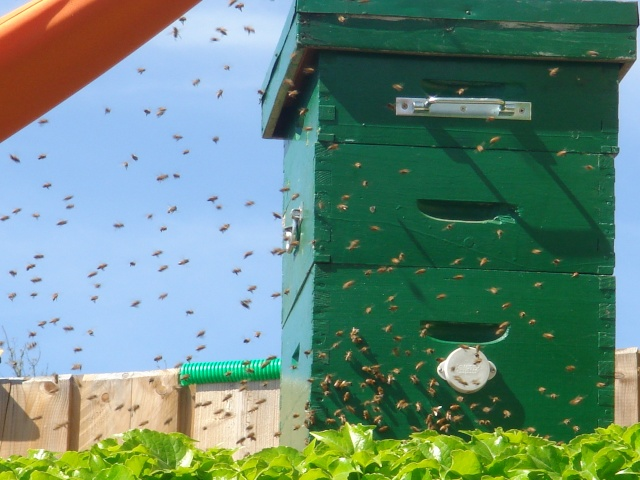 HELP!!!!une ruche sur un toit...........la saga! - Page 4 Mes_za11